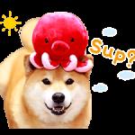 Shiba Maru Stiker 2 4